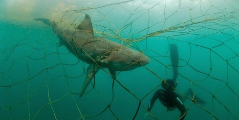 @Oceana Report Sheds Light On Staggering #ByCatch Problem In U.S. Fisheries | Rescue our Ocean's & it's species from Man's Pollution! | Scoop.it