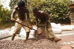 How Fairtrade benefits cocoa farmers – the Kuapa Kokoo experience - GhanaWeb | Fair Trade sacc | Scoop.it