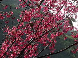 野草花果有機農場 | horticulture lessons | Scoop.it