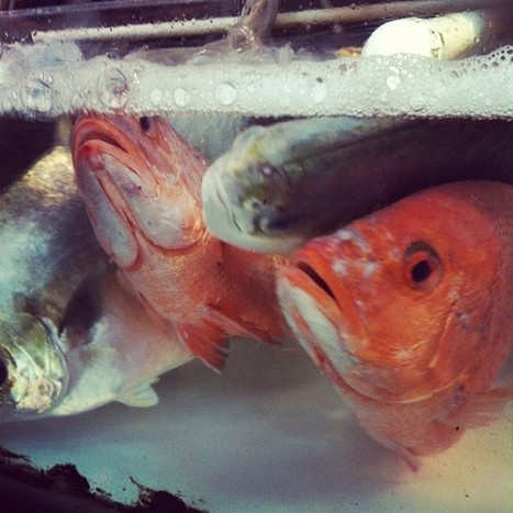 The Aquaculturists: 20/07/2015: Economy of scales: A look into the Hong Kong fish farming industry   Global Aquaculture News & Events   Scoop.it