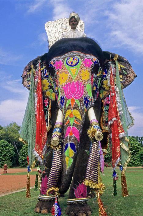 30+ Ferocious Elephant Photos | Envirocivl | Scoop.it