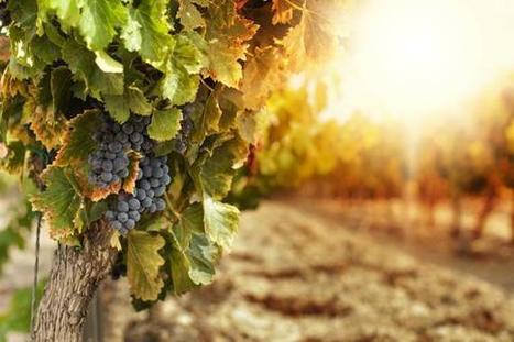 Le Sénat reconnaît que le vin fait «partie du patrimoine» de la France | Odyssea : Escales patrimoine phare de la Méditerranée | Scoop.it