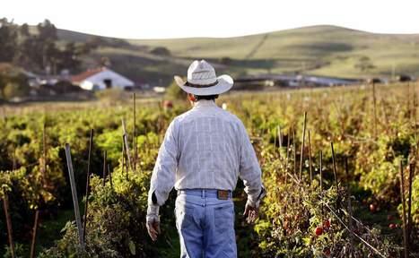 Lack of immigration fix leaves crops rotting in California fields - Santa Rosa Press Democrat   U.S.-Mexico border   Scoop.it