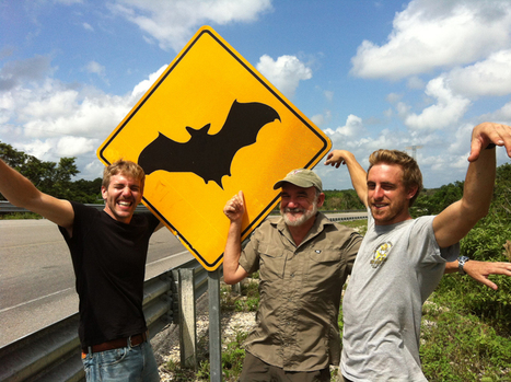 Take The Bat Man, Dracula, And Tequila. Mix Well. - WBUR | Bat Biology and Ecology | Scoop.it