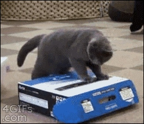 19 Irresistible GIFs of Cats in Boxes | Affiliate Marketing & Make Money Online | Scoop.it