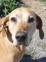 Senior Dogs - Patch.com | The DIY Veterinarian | Scoop.it