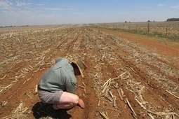 Farmers bear brunt of South Africa's severe drought: 'All we can do is pray' | Sustainable Futures | Scoop.it