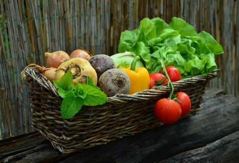 5 apps para promover una buena alimentación - Educación 3.0   Apasionadas por la salud y lo natural   Scoop.it