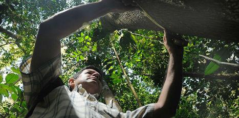 Costa Rica podría ser clave en 'limpieza' de la atmósfera | Atmósfera, ecología y recreación | Scoop.it