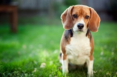 Is Your Lawn Hurting Your Dog? - Global Animal | Cats and Dogs | Scoop.it