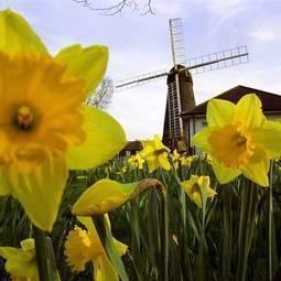 Urban windmill campaign launched - Belfast Telegraph | Windmills | Scoop.it