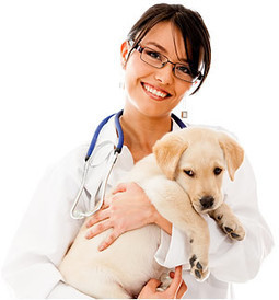 Vet Care At Woodbridge Animal Hospital | Napa Valley Animal Hospital | Scoop.it