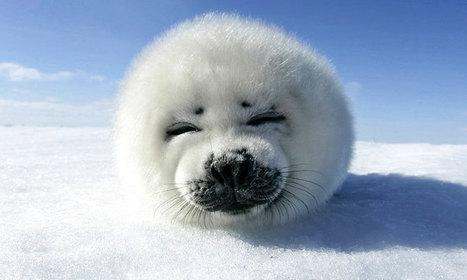 31 animaux sublimés par les couleurs hivernales | The Blog's Revue by OlivierSC | Scoop.it