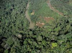 Paraguay saves its forests by extending Zero Deforestation Law - EcoSeed | Atlantic forest | Scoop.it