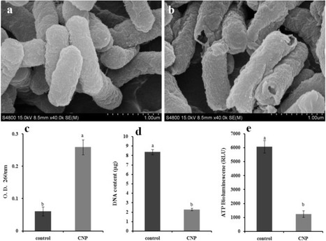 Synergetic antibacterial efficacy of cold nitrogen plasma and clove oil against Escherichia coli O157:H7 biofilms on lettuce   Plant - Salmonella or E. coli Interactions   Scoop.it