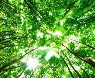 Future increase in plant photosynthesis revealed by seasonal carbon dioxide cycle   Fragments of Science   Scoop.it