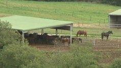 INFO FRANCE 3 : nouveau scandale alimentaire lié à un trafic de viande de cheval - France 3 Languedoc-Roussillon | Cheval et Nature | Scoop.it