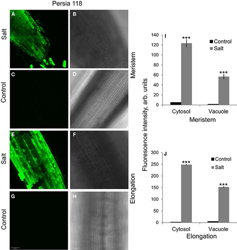 Frontiers | Linking salinity stress tolerance with tissue-specific Na+ sequestration in wheat roots | Plant Physiology | Plant nutrition & stress | Scoop.it