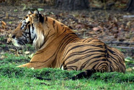 Indian Wildlife Club Blogs | Package Tours in India | Scoop.it