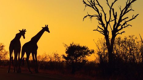 Kenya: The Case for a Total Overhaul of Kenya's Tourism and Wildlife Conservation Policies | Ecotourism in Kenya | Scoop.it