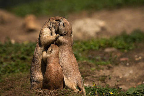 These 50 Photos Of Baby Animals And Their Parents Prove Family Is Everything | Parenting, Family & Kids | Scoop.it
