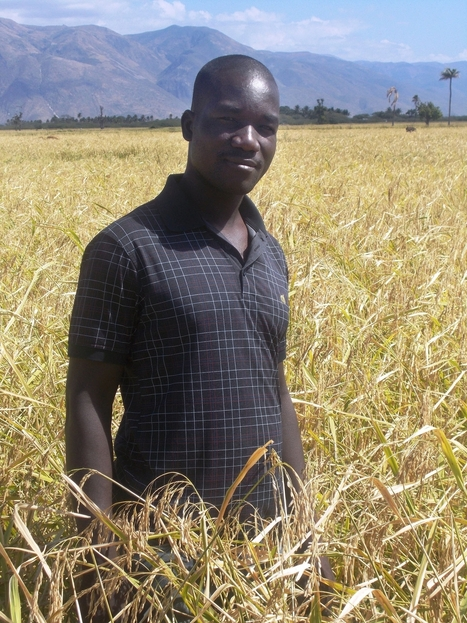 Haitian Rice Farmers Double Their Yields | U.S. Agency for International Development | Sustainable Resource Science | Scoop.it