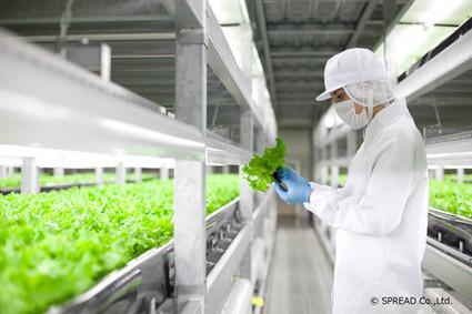 Vertical farms | Vertical Farm - Food Factory | Scoop.it