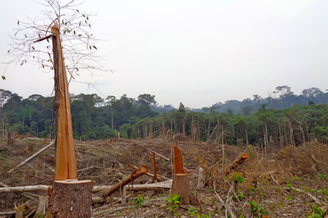 Kalimantan community maps forest to thwart timber companies   Forestry   Scoop.it
