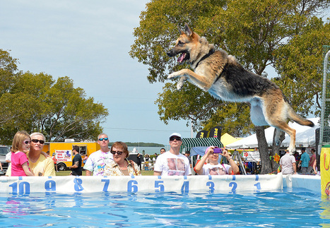 Florida Keys Woofstock Attracts Dog Lovers & Pooches - CBS Local | dog lovers | Scoop.it