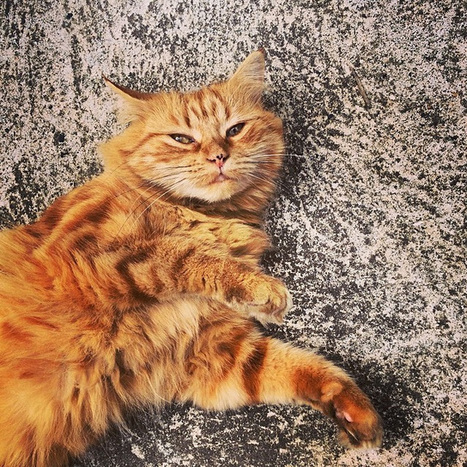The Delightful Kitty Who Lives up the Road | omgamazingpics | Scoop.it