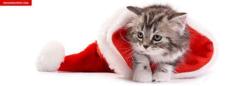 Christmas Cat Kitten Photos | Christmas Cat Facebook Covers Download | Wallpapers | Scoop.it
