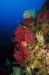 Introducción al ecosistema marino   Botánica Marina   Scoop.it