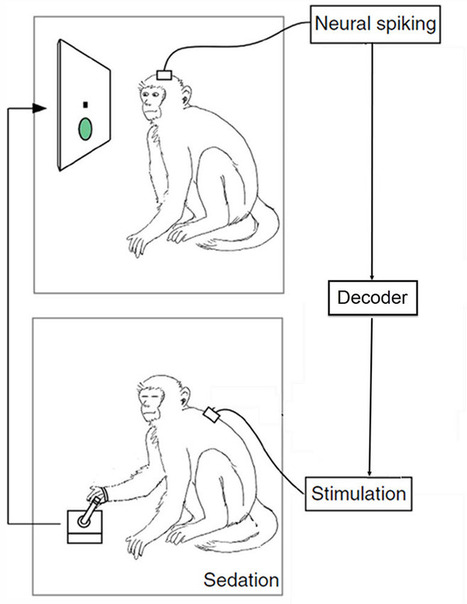 Brain signals from a primate directly move paralyzed limbs in another primate 'avatar' | Conciencia Colectiva | Scoop.it
