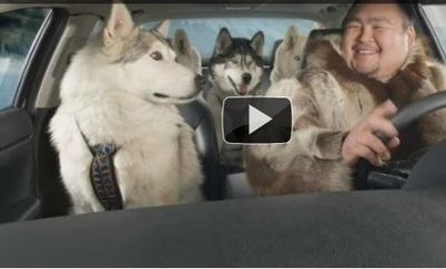 Guide to the Super Bowl Dog Commercials | Psychology of Consumer Behaviour | Scoop.it