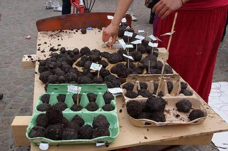 Seed Bombs for the Seed Library Las Vegas at Maker Faire! | FoodHub Las Vegas | Scoop.it