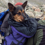 Man faces animal cruelty charge after abandoning dog on mountain | fitness, health,news&music | Scoop.it