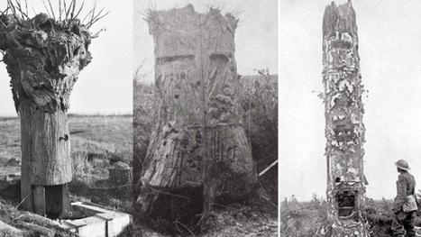 The Killer Trees of World War One | world war one, 1920's politics | Scoop.it