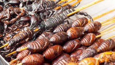Could bugs be the meat of the future? | Entomophagy: Edible Insects and the Future of Food | Scoop.it