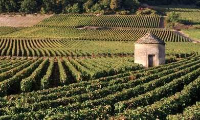 France's wine runs deep in our veins – selling our best bottles hurts - The Guardian | french properties | Scoop.it
