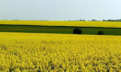 Les agriculteurs de la FNSEA dénoncent les excès de l'écologie | Questions de développement ... | Scoop.it