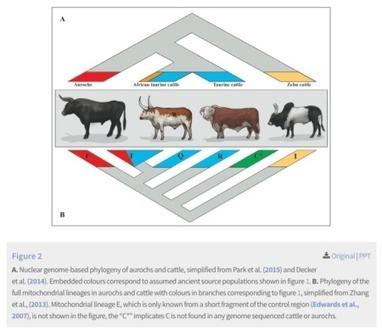 Aurochs redux | Agricultural Biodiversity | Scoop.it