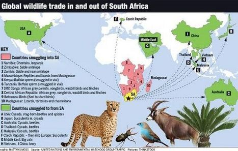 SA being plundered for 'perfect species' | Wildlife Trafficking: Who Does it? Allows it? | Scoop.it