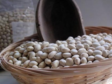 Heirloom and Nearly Extinct, the Italian Solfino Bean: La Tavola Marche and Slow Food | The Authentic Food & Wine Experience | Scoop.it