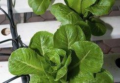 Climate of change ahead for gardening - U-T San Diego | Wellington Aquaponics | Scoop.it