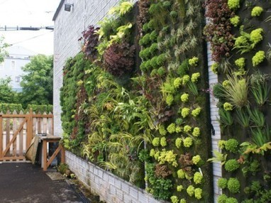 DIY Vertical Gardening | e-Expeditions | e-Expeditions News | Scoop.it