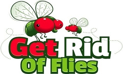 How To Get Rid Of Flies Full Guide Indoors and Outdoors | Get Rid Of Flies | Scoop.it