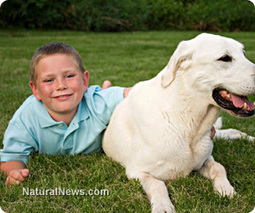 Having a family dog helps children build immunity against allergies, asthma | Dog Traning | Scoop.it
