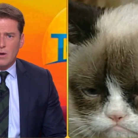 Grumpy Cat Gives Australian Anchor Case of the Giggles [VIDEO] - How not to use technology! | Cats Australia | Scoop.it