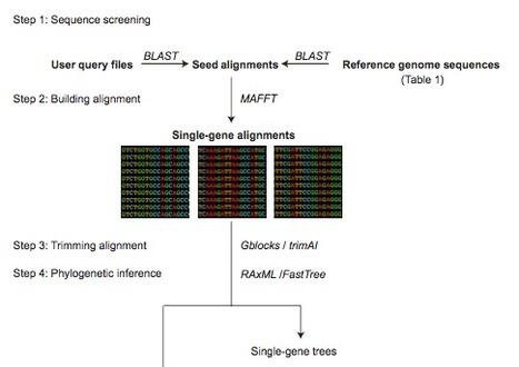 BIR Pipeline for Preparation of Phylogenomic Data | Single cell genomics and transcriptomics | Scoop.it