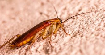 Mitos de las plagas de cucarachas   Pest Control Madrid   Negocios y Comercios   Scoop.it